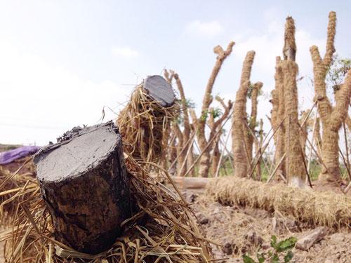 """Cận cảnh khu vườn nghỉ dưỡng của các """"cụ cây"""" Kim Mã - 8"""