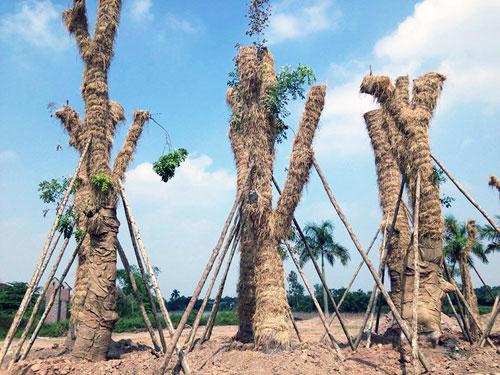 """Cận cảnh khu vườn nghỉ dưỡng của các """"cụ cây"""" Kim Mã - 5"""
