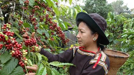 Xuất khẩu nông sản năm 2016: Gạo hụt hơi, cà phê bứt phá - 1