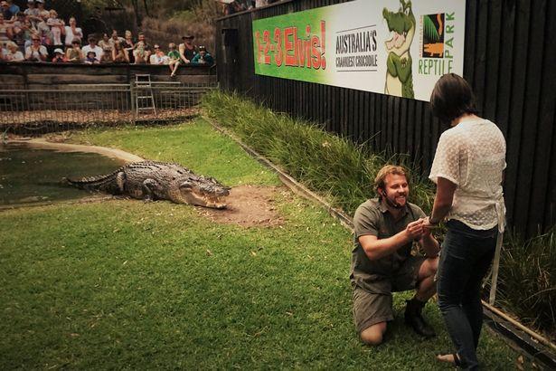 Úc: Vừa cho cá sấu khổng lồ ăn, vừa cầu hôn bạn gái - 1