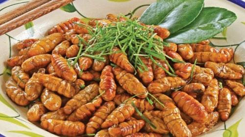 5 lưu ý khi ăn nhộng tằm để không ngộ độc - 2