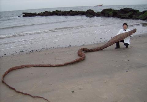 """""""Quái vật biển"""" khổng lồ bí ẩn dạt bờ Nhật Bản - 1"""