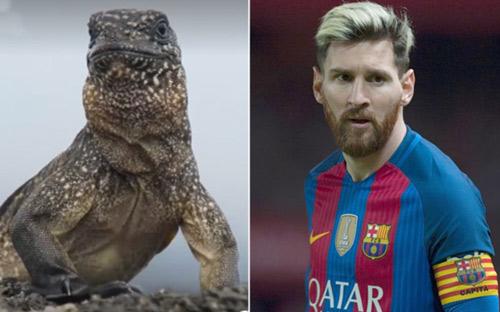 Bỏ Ronaldo, Messi được so sánh với… con cự đà - 1