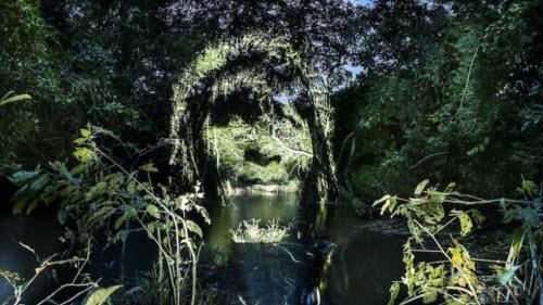 """Kinh ngạc bộ tranh """"vẽ"""" trên cây trong rừng Amazon - 2"""