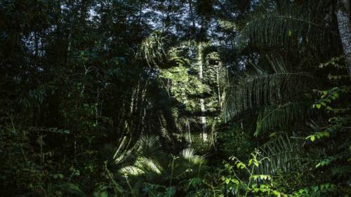 """Kinh ngạc bộ tranh """"vẽ"""" trên cây trong rừng Amazon - 3"""