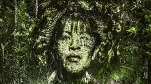 """Kinh ngạc bộ tranh """"vẽ"""" trên cây trong rừng Amazon - 4"""