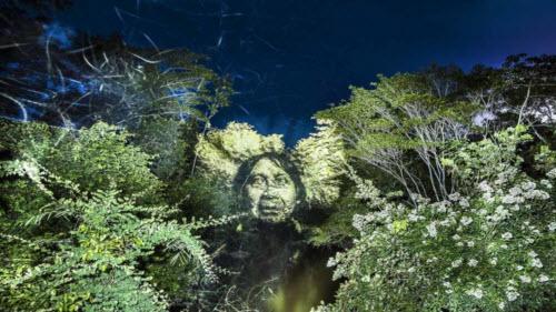 """Kinh ngạc bộ tranh """"vẽ"""" trên cây trong rừng Amazon - 6"""