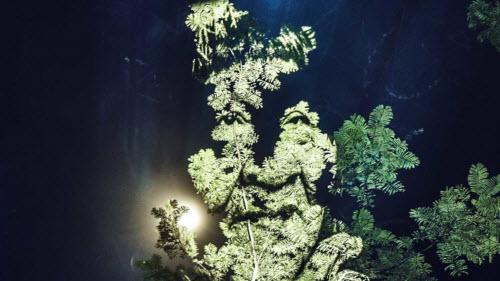 """Kinh ngạc bộ tranh """"vẽ"""" trên cây trong rừng Amazon - 8"""