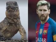 Bóng đá - Bỏ Ronaldo, Messi được so sánh với… con cự đà