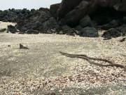Thế giới - Nghẹt thở với cảnh đàn rắn đói truy sát cự đà