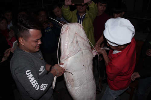 """Thêm một """"thủy quái"""" sông Mê Kông xuất hiện ở Hà Nội - 3"""