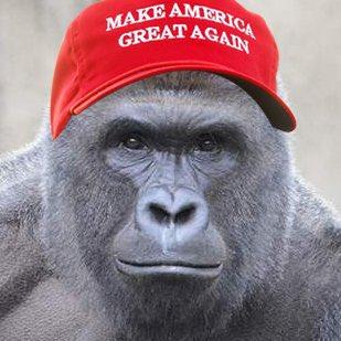11.000 người Mỹ bầu khỉ đột đã chết làm tổng thống - 3