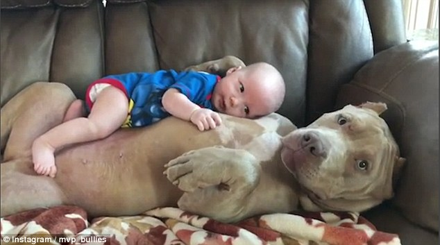 Video: Chó khổng lồ dỗ trẻ em dịu dàng như người mẹ - 1