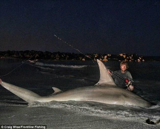 """Ngư dân Úc câu được cá mập đầu búa """"khủng"""" nhất thế giới? - 1"""