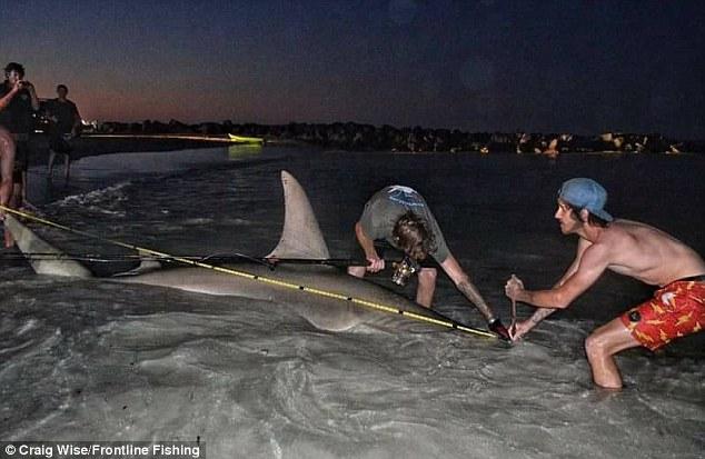 """Ngư dân Úc câu được cá mập đầu búa """"khủng"""" nhất thế giới? - 3"""