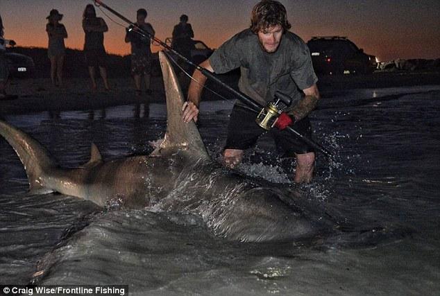"""Ngư dân Úc câu được cá mập đầu búa """"khủng"""" nhất thế giới? - 6"""