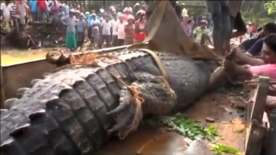 Phát hiện cá sấu quái vật nặng 1 tấn lẩn trốn trong kênh Sri Lanka - 3