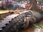 Phi thường - kỳ quặc - Phát hiện cá sấu quái vật nặng 1 tấn lẩn trốn trong kênh Sri Lanka