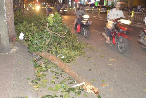 Cả gia đình gặp nạn vì nhánh cây rơi ở độ cao 30m xuống đường - 1
