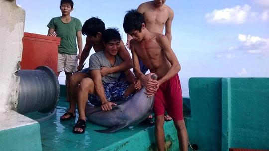 Truy tìm nhóm ngư dân sát hại cá heo ở Phú Quốc - 1