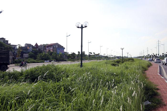Đề nghị Hà Nội cắt cỏ đường quốc lộ - 1