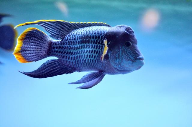 Tận thấy cá ông tiên, kim cương xanh giữa Sài Gòn - 2