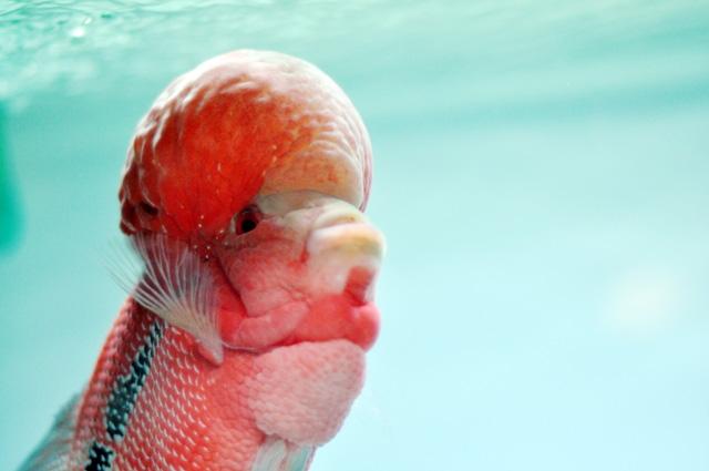 Tận thấy cá ông tiên, kim cương xanh giữa Sài Gòn - 9