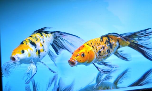 Tận thấy cá ông tiên, kim cương xanh giữa Sài Gòn - 10