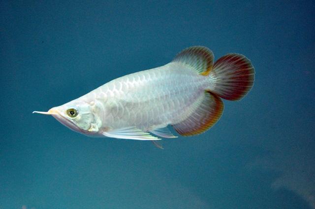 Tận thấy cá ông tiên, kim cương xanh giữa Sài Gòn - 13
