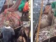 Phi thường - kỳ quặc - Quăng lưới bắt cá thu về một con sư tử biển 3 tạ