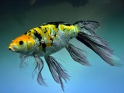 Tin tức trong ngày - Tận thấy cá ông tiên, kim cương xanh giữa Sài Gòn