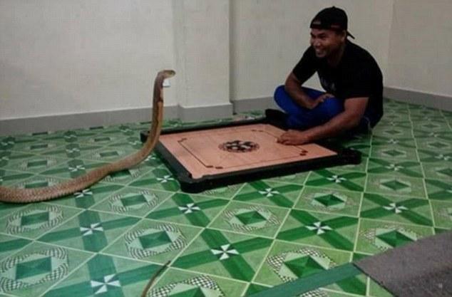 Chàng trai cưới rắn hổ mang khổng lồ làm vợ - 4