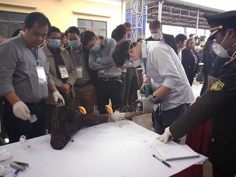 Lần đầu tiên Việt Nam tiêu hủy hơn 2.000 kg ngà voi - 4