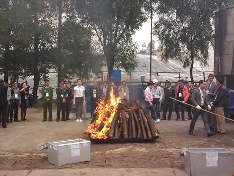 Lần đầu tiên Việt Nam tiêu hủy hơn 2.000 kg ngà voi - 8