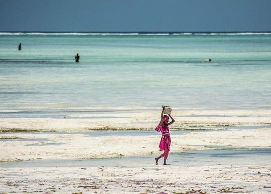 Những người săn bạch tuộc ở Zanzibar - 2