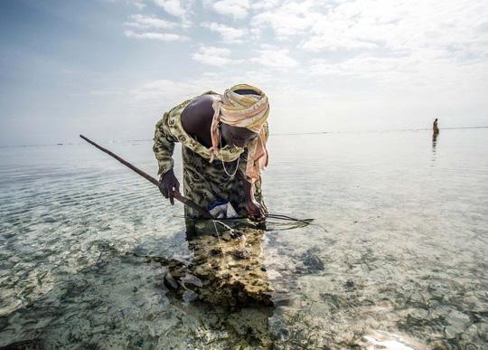 Những người săn bạch tuộc ở Zanzibar - 3