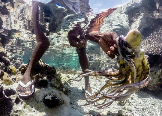 Những người săn bạch tuộc ở Zanzibar - 4