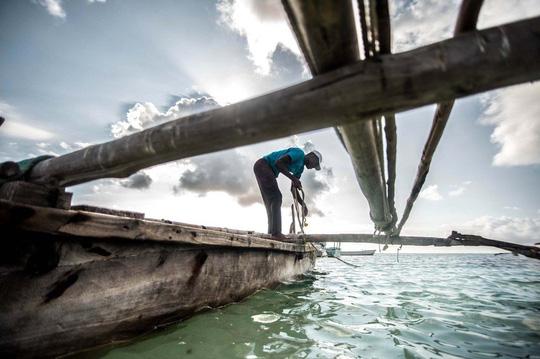 Những người săn bạch tuộc ở Zanzibar - 5