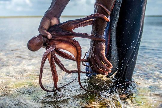 Những người săn bạch tuộc ở Zanzibar - 6