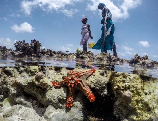 Những người săn bạch tuộc ở Zanzibar - 7