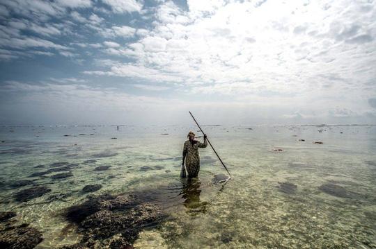 Những người săn bạch tuộc ở Zanzibar - 9