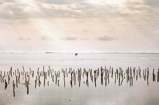 Những người săn bạch tuộc ở Zanzibar - 10
