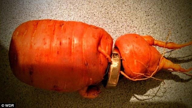 """Đức: Mất nhẫn vàng, 3 năm sau được củ cà rốt """"mang trả"""" - 1"""