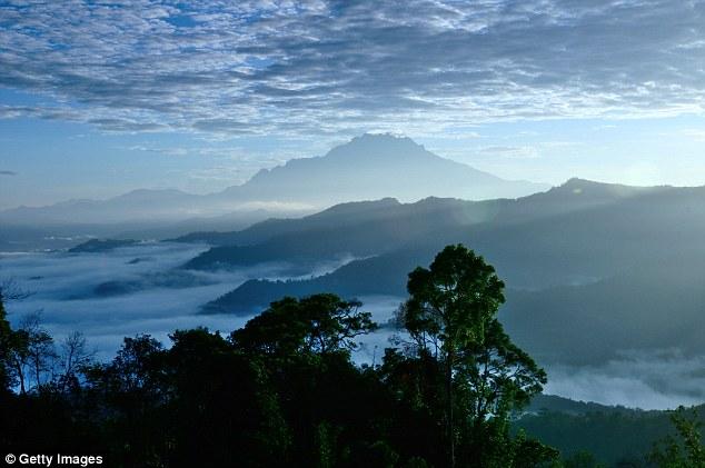 Phát hiện cây nhiệt đới cao nhất thế giới - 1