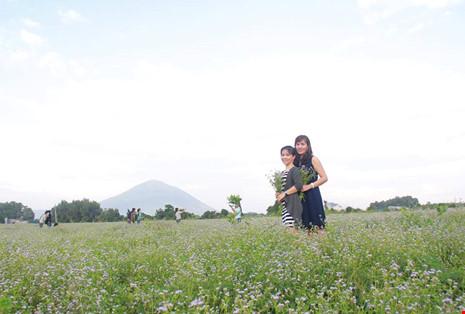 Đồng hoa dại đẹp lạ giữa lòng thành phố Tây Ninh - 3