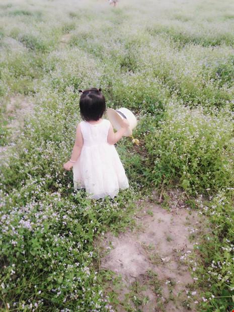 Đồng hoa dại đẹp lạ giữa lòng thành phố Tây Ninh - 5