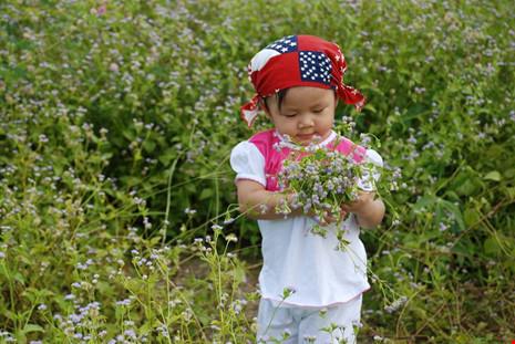 Đồng hoa dại đẹp lạ giữa lòng thành phố Tây Ninh - 6