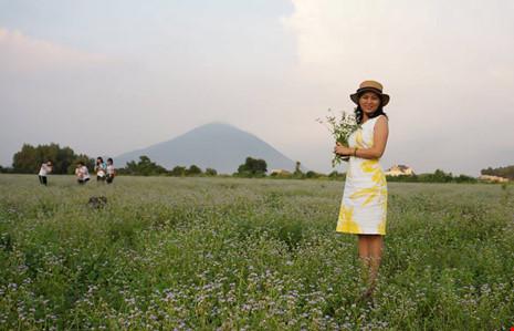 Đồng hoa dại đẹp lạ giữa lòng thành phố Tây Ninh - 7