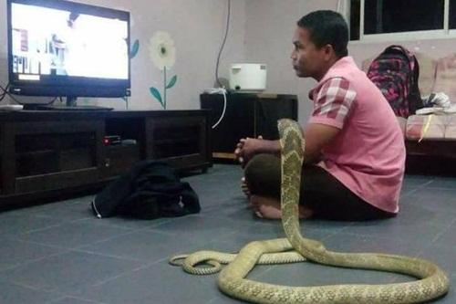 Sống chung với rắn hổ mang vì nghĩ là bạn gái chuyển kiếp - 1