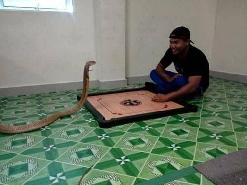 Sống chung với rắn hổ mang vì nghĩ là bạn gái chuyển kiếp - 3